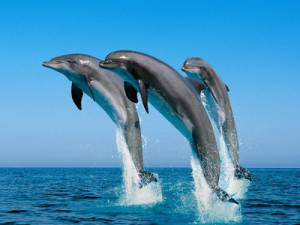 Chilika lake Dolphin