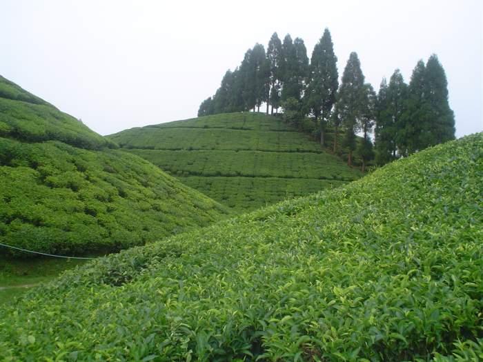 West Bengal tourism